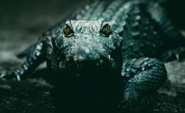 Top movies with crocodiles or alligators