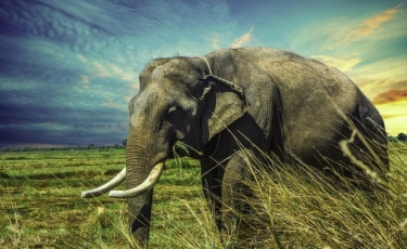 Best movies with elephants and mammoths