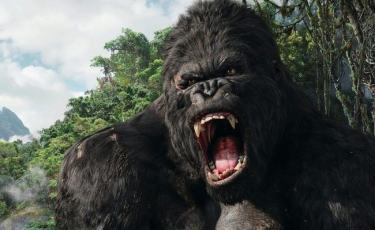 Top Movies with Monkeys or Gorillas