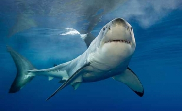 Top filme cu rechini