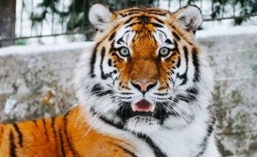 Top filme cu tigri